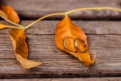 Gold wedding rings on maple leaves royalty free stock images