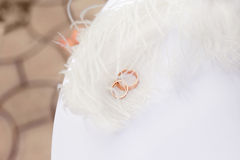 Gold wedding rings nestling in white feathers Stock Photo