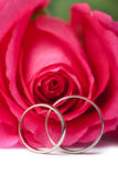 Gold wedding rings and pink rose isolated Stock Image