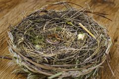 Gold wedding rings in a real bird`s nest Stock Photo
