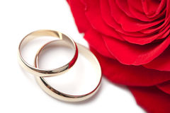 Gold wedding rings and red rose isolated Stock Photo