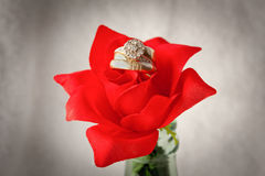 Gold Wedding Rings On A Red Rose Stock Photography