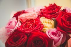 A gold wedding rings rests on red roses. Wedding decoration, the symbol of the family. royalty free stock photo