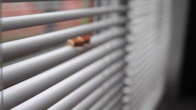 Gold wedding rings on a windowsill , the light through the blinds stock footage