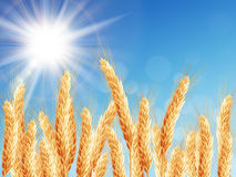 Gold wheat field and blue sky. EPS 10. Vector file included Stock Images