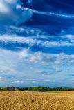 Gold wheat fields and dramatic blue sky in July, Belgium Royalty Free Stock Photography