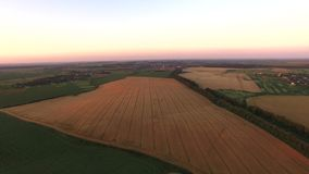 Gold Wheat flied panorama with tree at sunset royalty free stock image