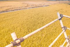 Gold Wheat flied panorama with tree at sunset, rural countryside.Scarecrow stand in field.bamboo wood terrace.nature background royalty free stock images