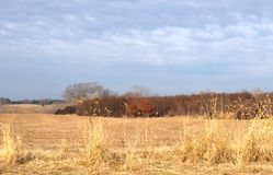 Subtle Pastel Shades of Blue and Gold in Winter Scenic. Gold wheat in the forefront lay out the visual panorama, with auburn leaved trees in the background, and stock photos