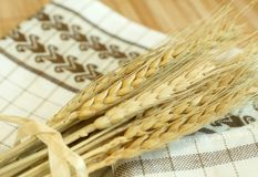 Gold wheat harvest Stock Photography