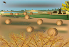 Gold wheat harvest illustration. Landscape with gold wheat harvest Royalty Free Stock Photos