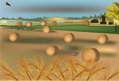 Gold wheat harvest illustration Royalty Free Stock Photos
