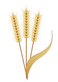 Gold Wheat Royalty Free Stock Image