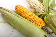 Gold and White Corn Royalty Free Stock Image