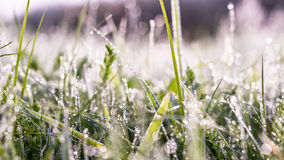 Gold winter sun on late autumn dew lined grass. Gold winter sun on late autumn dew lined green grass drop sparkling fairy-tail atmosphere hazy background Royalty Free Stock Photos