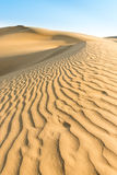 Gold yellow dunes under blue sky Royalty Free Stock Photography