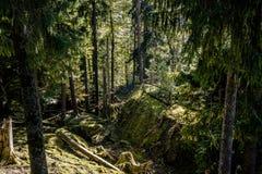 Goldau природного парка Стоковое Фото