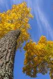 Goldbäume in einem Park Stockbild