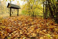 Goldblätter am Herbst lizenzfreies stockbild