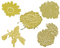 Goldblumen Stockbild