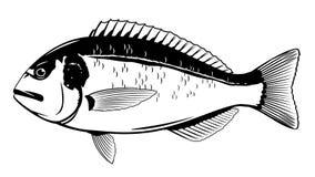 Goldbrassen-Fische Schwarzweiss vektor abbildung