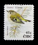 Goldcrest Regulusregulus, fågelDefinitives serie 1997-2001, circa 1998 Royaltyfri Fotografi