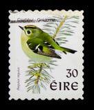 Goldcrest (Regulusregulus), fågelDefinitives 1997-2001 serie, fosforram, circa 1998 Arkivfoton