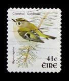 Goldcrestregulus regulus, serie van Vogeldefinitives 1997-2001, circa 1998 Royalty-vrije Stock Fotografie