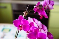 Goldeheringe auf Blumenorchidee Stockfotografie