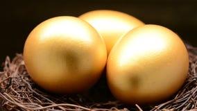 Goldeier auf dem Nestdrehen stock footage