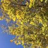 golden Stockbild