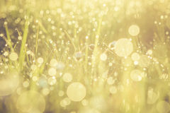 Golden abstract background concept, soft focus, bokeh, warm tone Stock Image