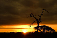 Golden African sunset Stock Image