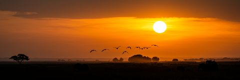 Free Golden African Sunset With Flock Of Birds Stock Photo - 155962170