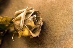 Golden rose on golden metallic background Royalty Free Stock Photos