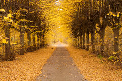 Golden alley Royalty Free Stock Image