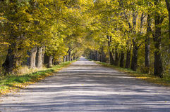 Golden alley in autumn Royalty Free Stock Photo