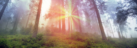 Golden alpine forests Royalty Free Stock Images