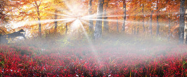 Golden alpine forests Royalty Free Stock Photo