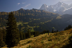 Golden Alpine Pasture Stock Images