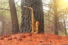 Golden Alto Saxophone in the Forest at the Foot of Mount Etna. The island of Sicily, Italy. Place for Text. Card. Romantic royalty free stock photos