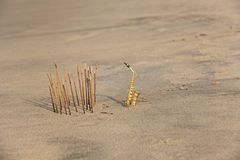 The golden alto saxophone stands on the sand next to the incense. Romantic musical background. Musical cover, creative, relaxation. And meditation. Design with stock image