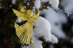 Golden Angel Christmas Ornament Decorating a Snowy Outdoor Tree Royalty Free Stock Photo