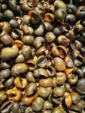 Golden apple snails Royalty Free Stock Photography