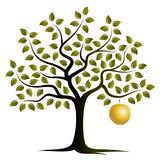 Golden apple tree Stock Images