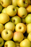 Golden Apples. Golden Yellow Apples Just Harvested Stock Image