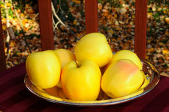 Golden apples in autumn Royalty Free Stock Photos