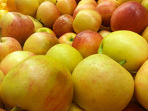 Golden Apples Backgrounds. Close up golden apples natural and freshness Stock Image
