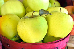 Golden apples in red basket Stock Images