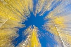 Golden Aspen And Blue Sky Blur Stock Photography